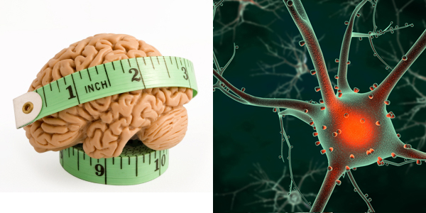 Neuroscience & Obesity